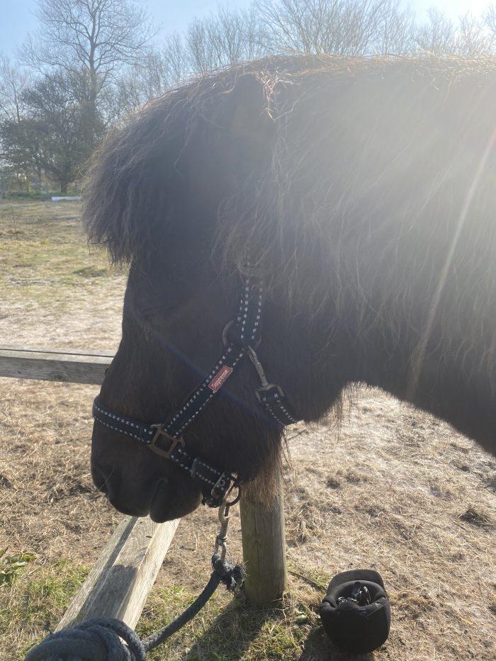 Paardrijden in IJsland. Een droom dat uitkomt.