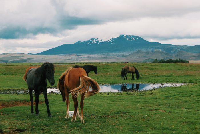 Wil je paardrijden in IJsland.